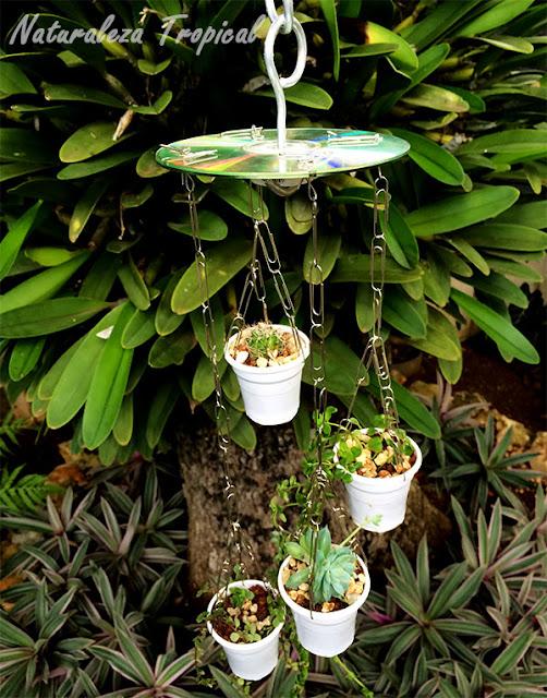 Sonajero de plantas adornando nuestro jardín
