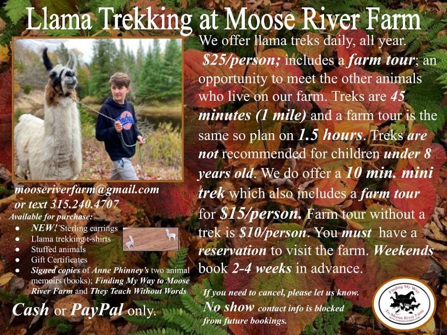Llama Trekking at Moose River Farm