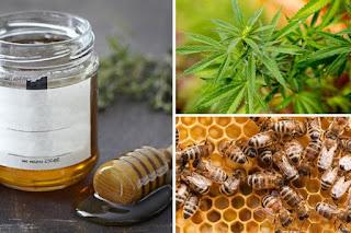 пчели произвеждат мед от канабис