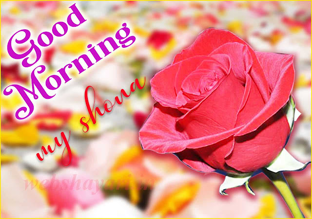 lal gulab gud morning photo  download kare