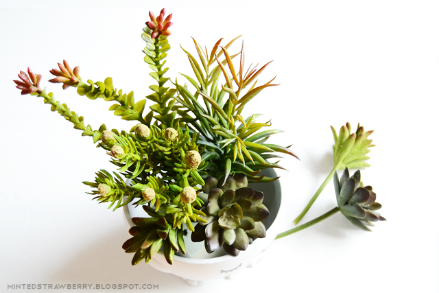 arranging succulents on plant pot