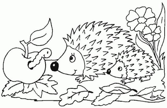 Malvorlagen Gratis Tiere Igel