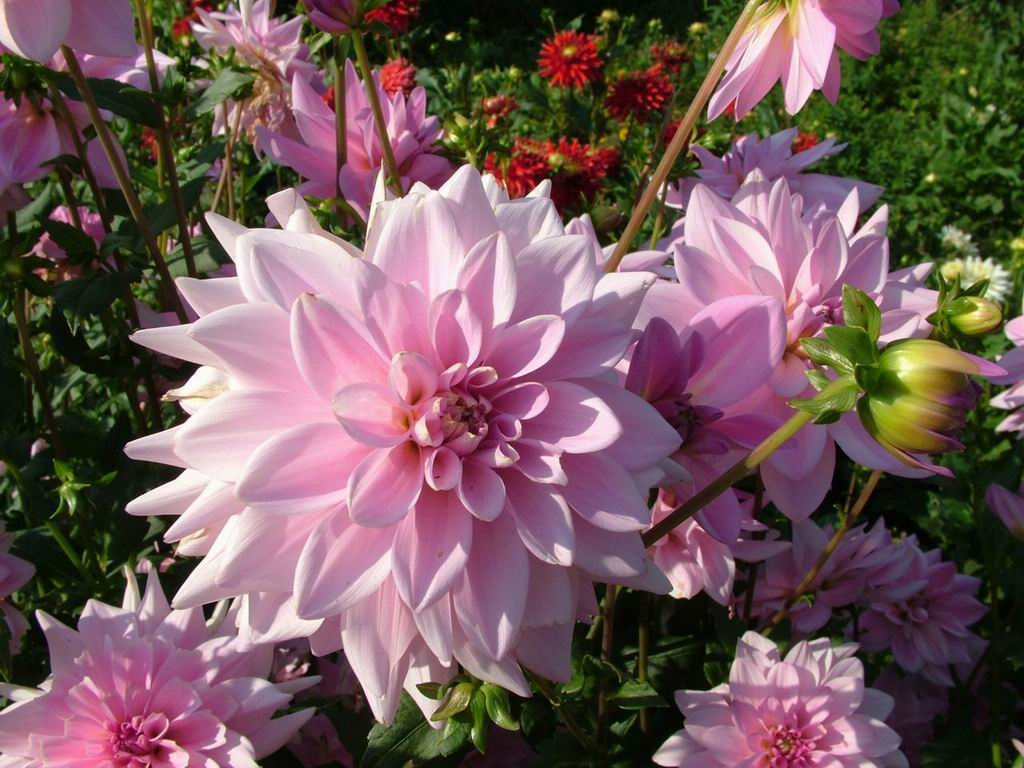 Beautiful Flowers: Colour Ful Flowers