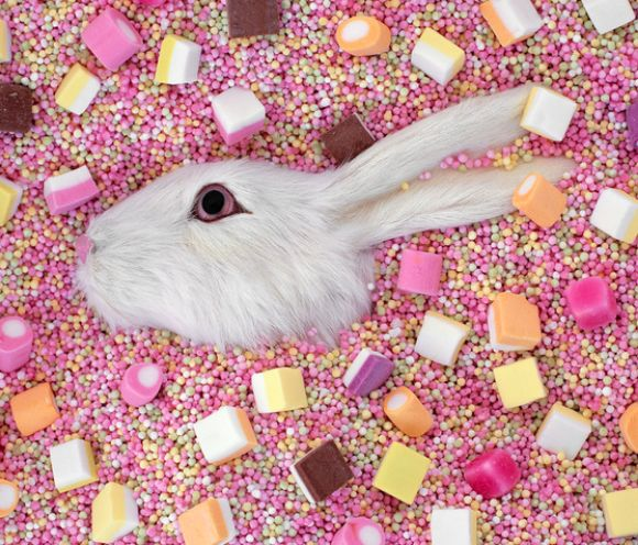 Liz Wolfe - Photography - Sweet Bunny