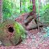 O que é sucessão ecológica? Desenvolvimento e evolução no ecossistema