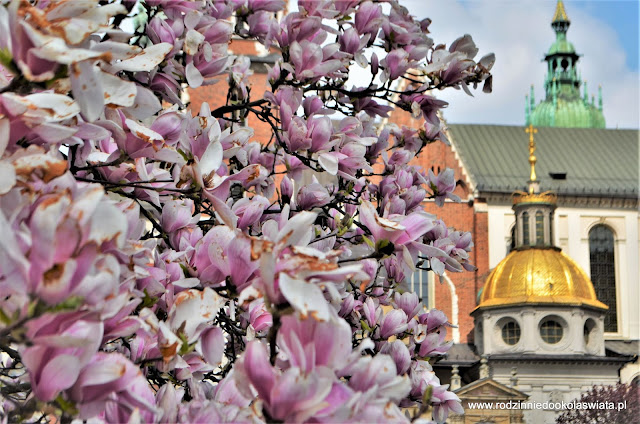 Wiosna w Krakowie, gdzie jej szukać?