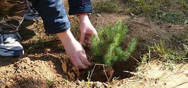 Αν φυτέψουμε 1 τρισ. νέα δένδρα θα «φρενάρουμε» την κλιματική αλλαγή
