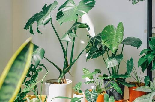 بسبب المبيدات الحشرية.. إحذر تناول هذه النبتة في هذا التوقيت