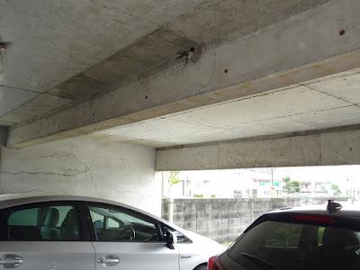 車庫の梁に巣作りを始めたツバメ