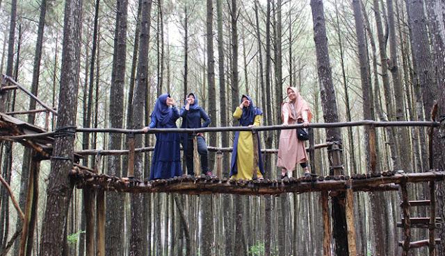 Spot Foto di Wisata Hutan Pinus Mangunan Jogja