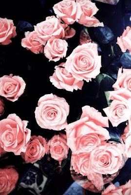 Rosas rosadas sin cortar