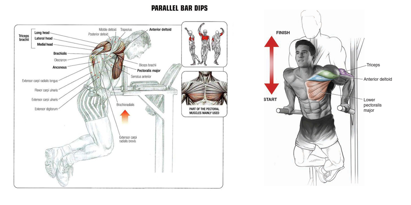 Muscle Palace: build muscle mass