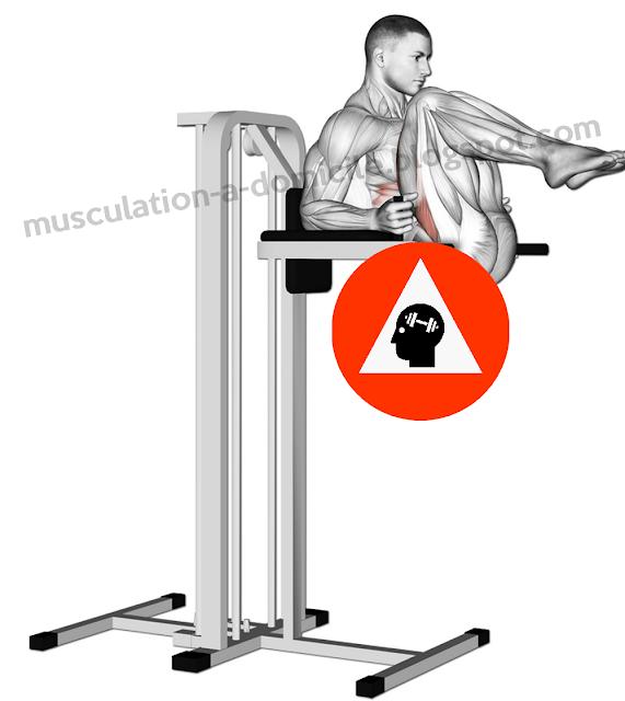 exercice musculation abdos relévé bassin chaise romaine