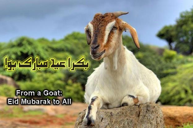 Bakra Eid HD Wallpapers Free Download