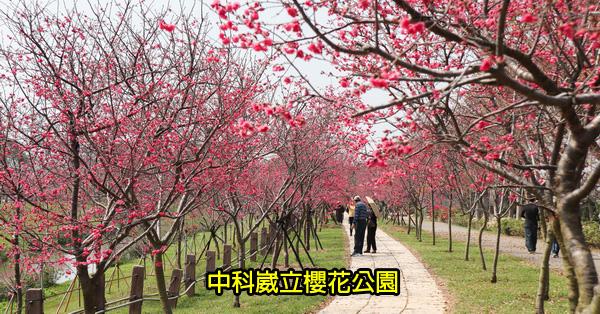 台中后里|中科崴立櫻花公園|綠萼櫻|八重櫻|多條賞櫻步道散步拍美照