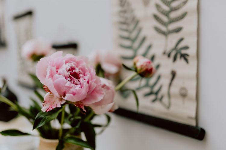 piwonie wiosenne kwiaty