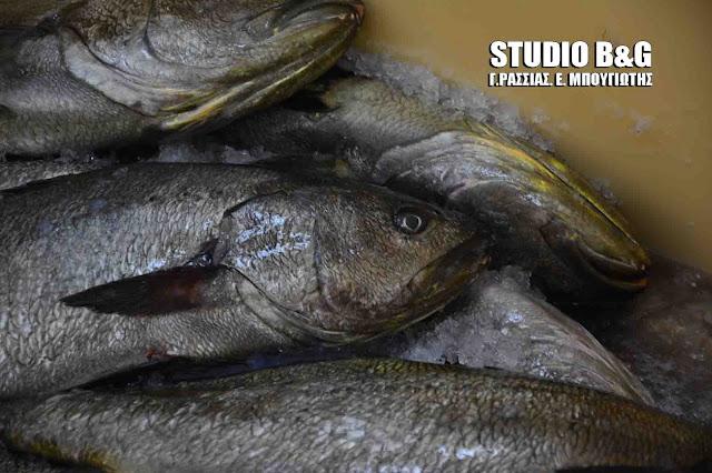 Εργατικό Κέντρο Ναυπλίου: Κρανιός ιχθυοκαλλιέργειας το ψάρι που θα διατεθεί