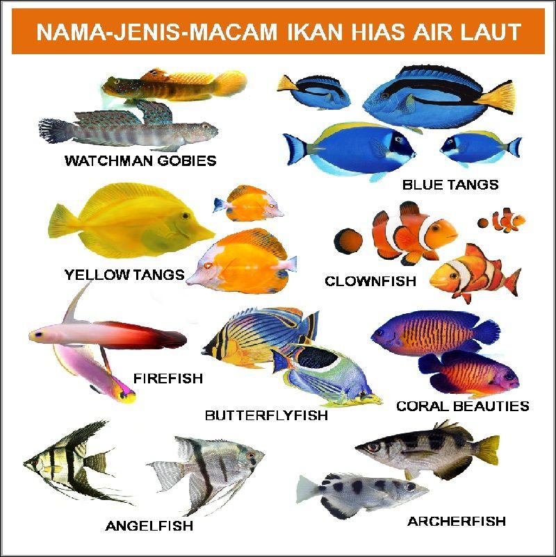 Nama Latin Ikan Air Tawar dan Ikan Air Laut