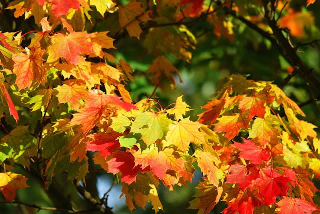 pianta-da-giardino-con-foglie-rosse