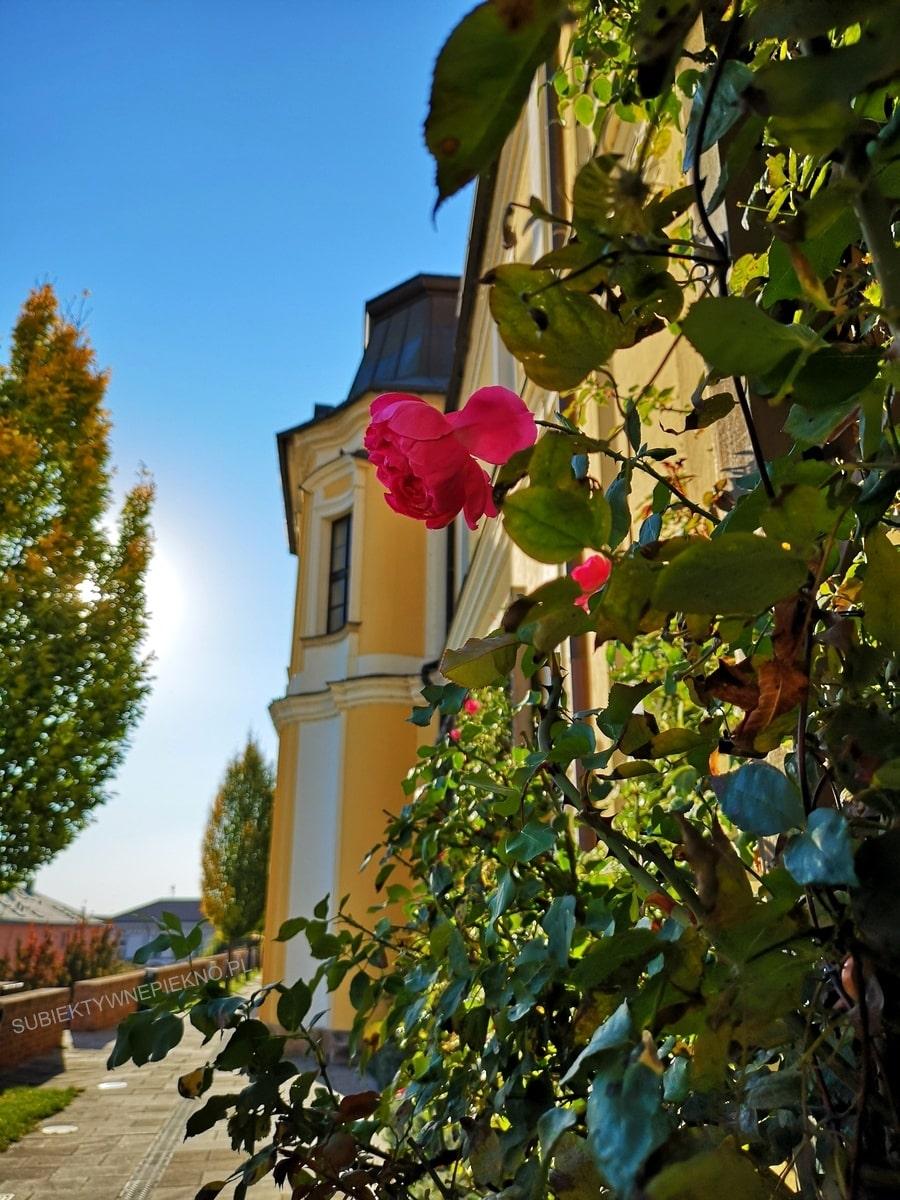 Hradec Kralove co zwiedzić? Stare miasto
