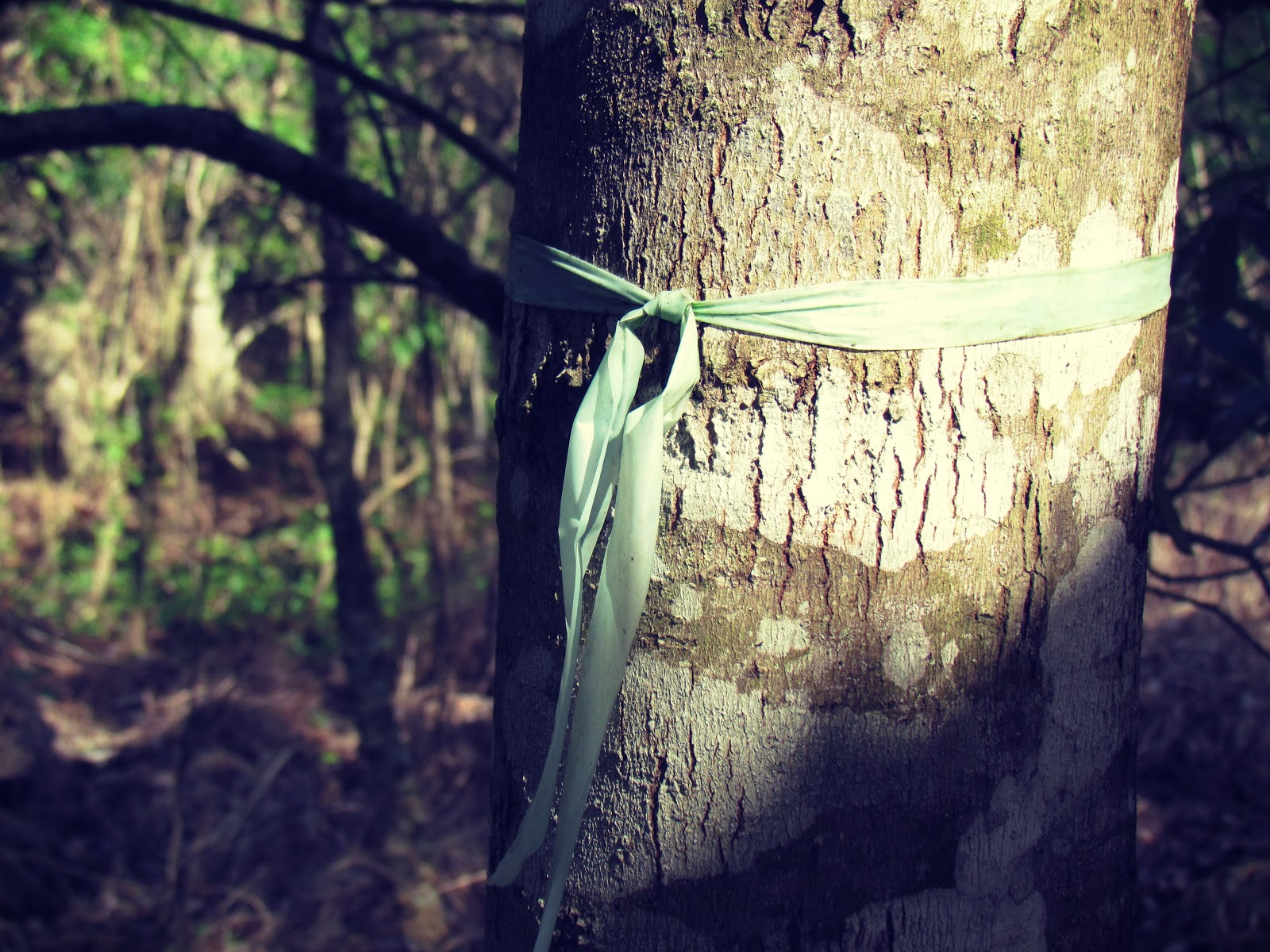 An aqua colored ribbon tied around an old oak tree in a Florida wetland in the summer