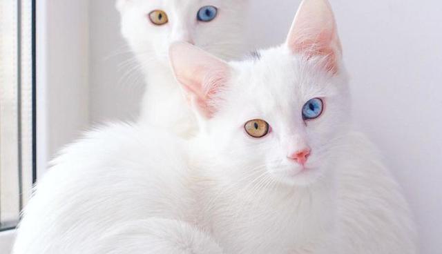 [ Mudah ] Inilah Arti dari Mimpi Kucing, Tafsir Mimpi Kucing Mati, Pertanda Buruk Atau Pertanda Baik