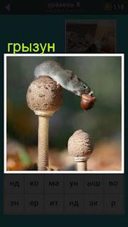 сидит грызун на грибе и в зубах желудь 667 слов 8 уровень