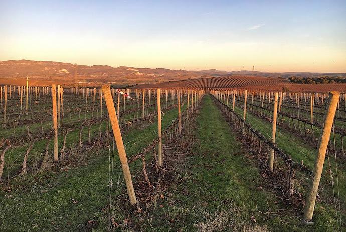 Detalle de las viñas del Somontano