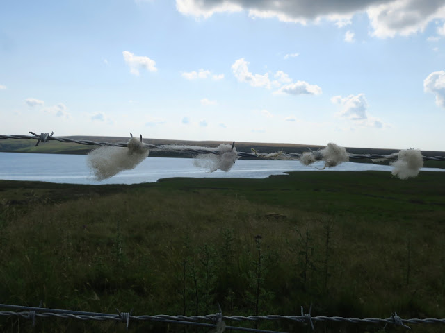 Wool caught on barbed wire at Warley Reservoir, Calderdale, West Yorkshire, with similarly shaped clouds above.