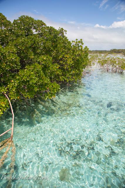 Mangroves, Bennet's Creek, Cat Island