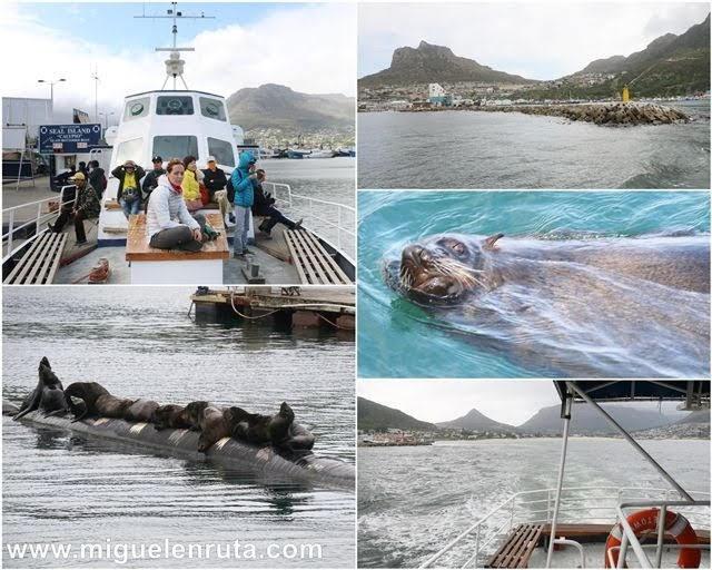 Tour-leones-marinos-Sudáfrica
