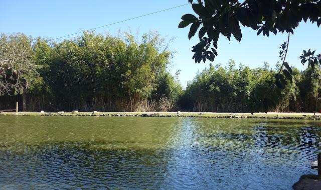 Lagoa - Área de Preservação Permanente