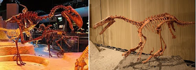 Phorusrhacidae and Velociraptor Skeletons