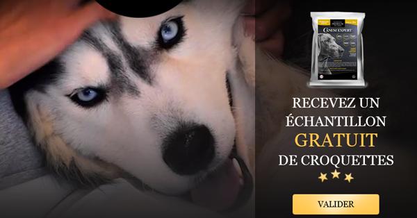 Échantillon gratuit Croquettes pour chien de Canem Expert