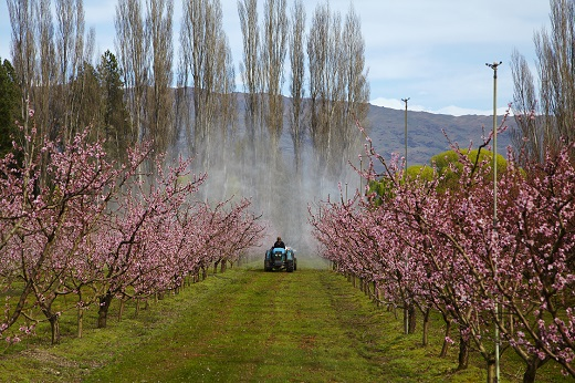 Kako sačuvati pčele za vrijeme primjene pesticida, fungicida