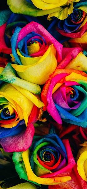 Beautiful rainbow flowers wallpaper