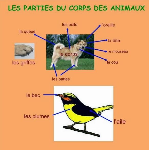 Opisywanie zwierząt - słownictwo 4 - Francuski przy kawie