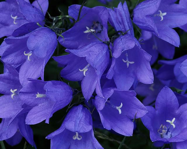 http://1.bp.blogspot.com/-m-1OUuaQs8c/TgquF1sUz1I/AAAAAAAAMIY/UmmsuAni8rI/s640/Beautiful+Flowers+Wallpapers+%252822%2529.jpg