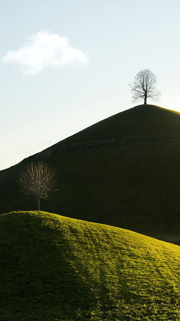 Alone Tree On Hill Nature Screen Background