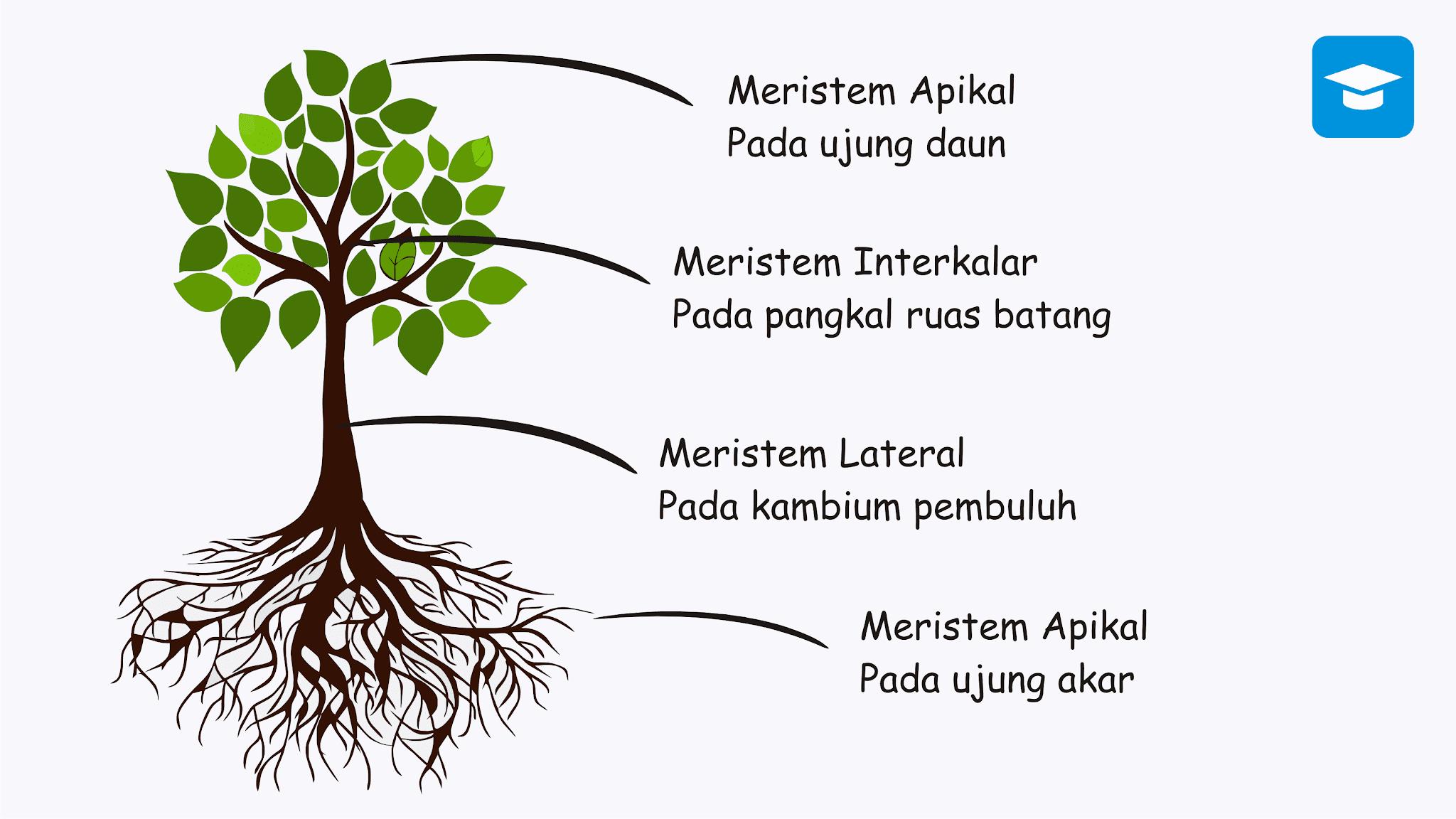 Struktur fungsi jaringan tumbuhan