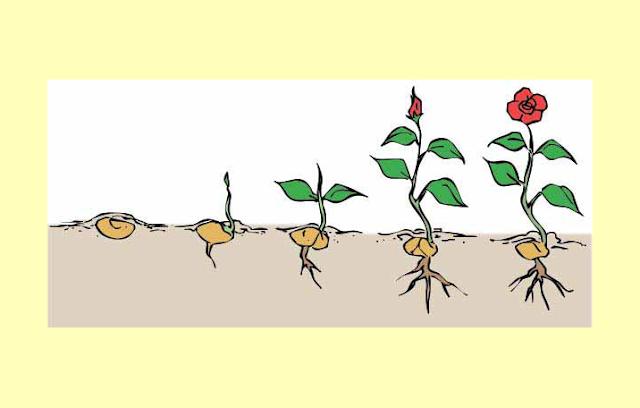 Pertumbuhan Makhluk hidup