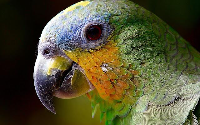 Aves para el hogar