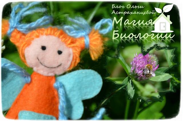 загадки-летние-цветы-магия-биологии