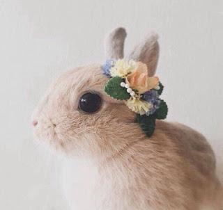 """""""10 pytań do… """" – Q&A do Bunny – czyli rzeczy których o mnie nie wiecie i kilka słów o mnie."""