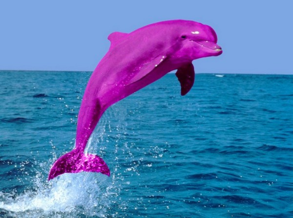 Funny Pink Dolphins | Funny Animals - photo#10