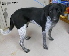 2/25/12  Long term residents of shelter need out. Shelter full.  Sponsors, Adopters Needed.Euth?