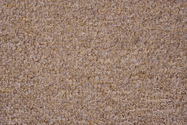 Light brown carpet texture
