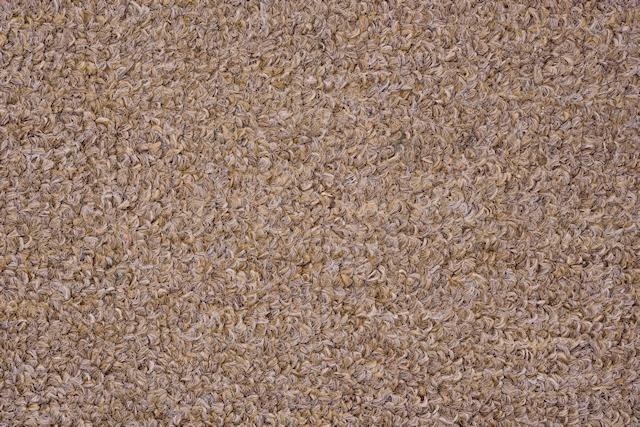 Light brown carpet texture