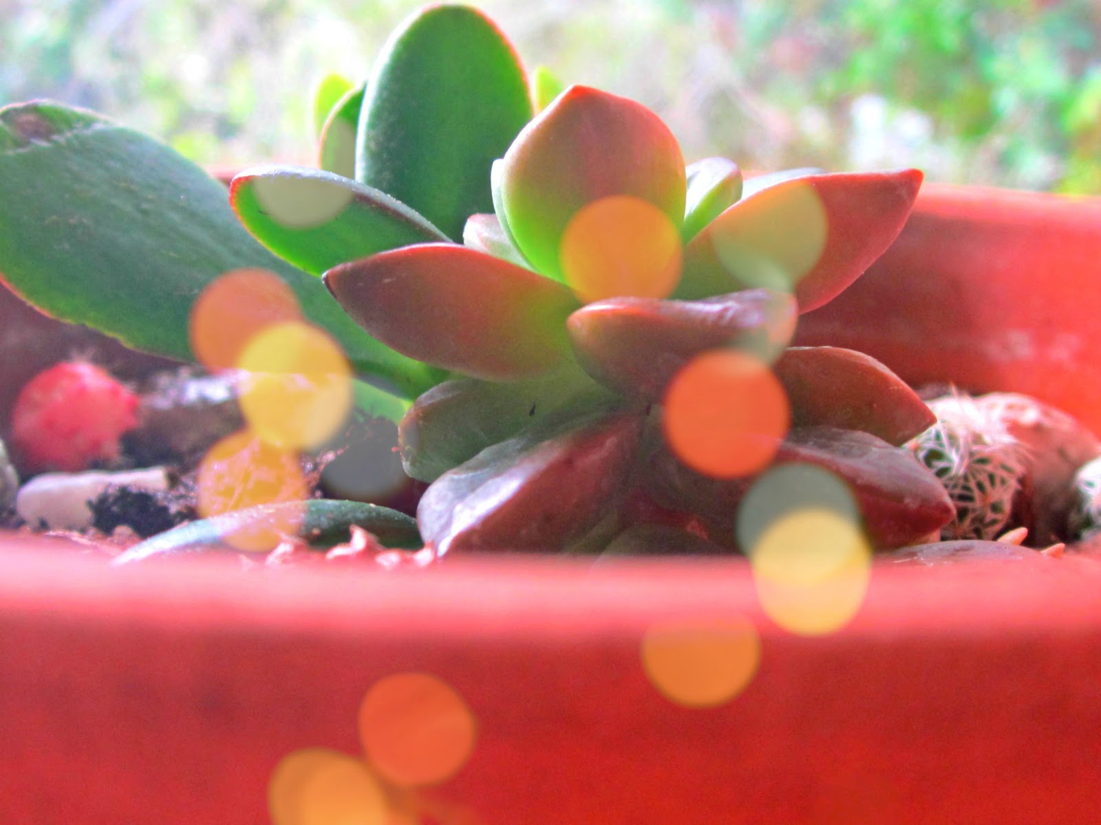 Plant Life With Bokeh Lights and Slow Living style