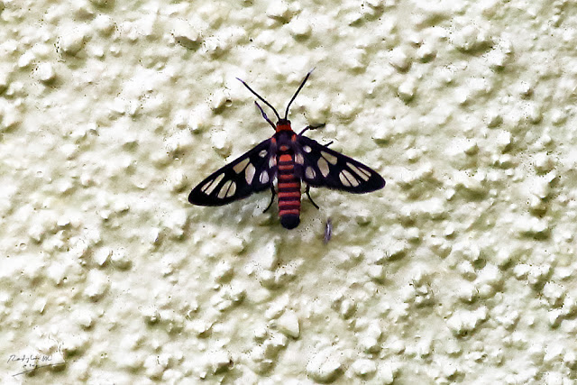 Insect on the wall, Birding during Eid-Adha Holiday